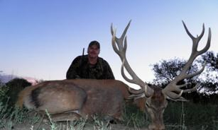 Argentina Big Game Red Stag